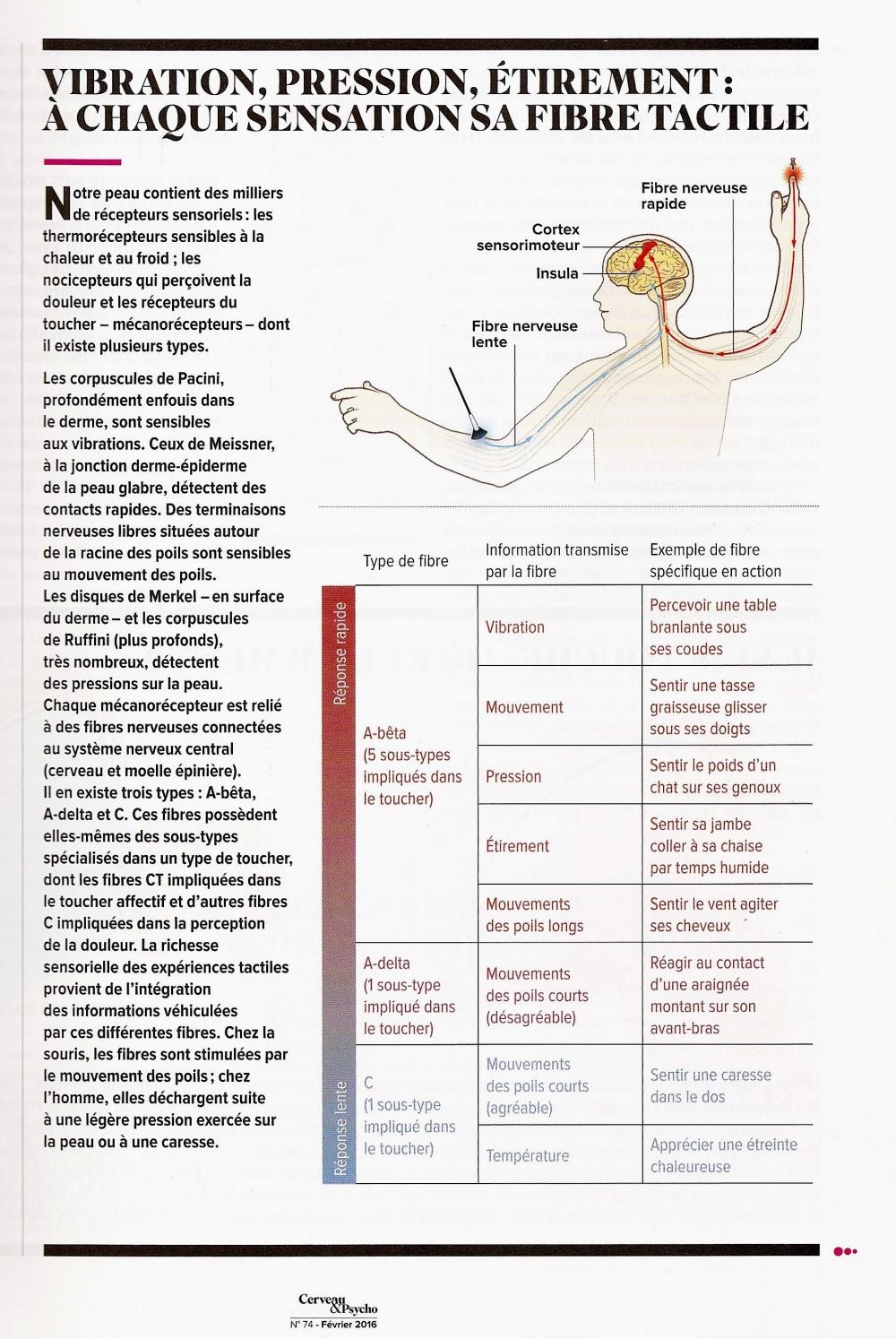 fibres tactiles